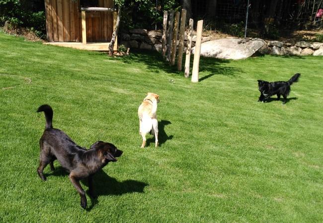 Hunde toben in der Hundezone