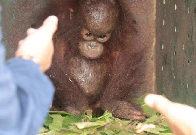 Orphan Kartini was alone and frightened when rescued