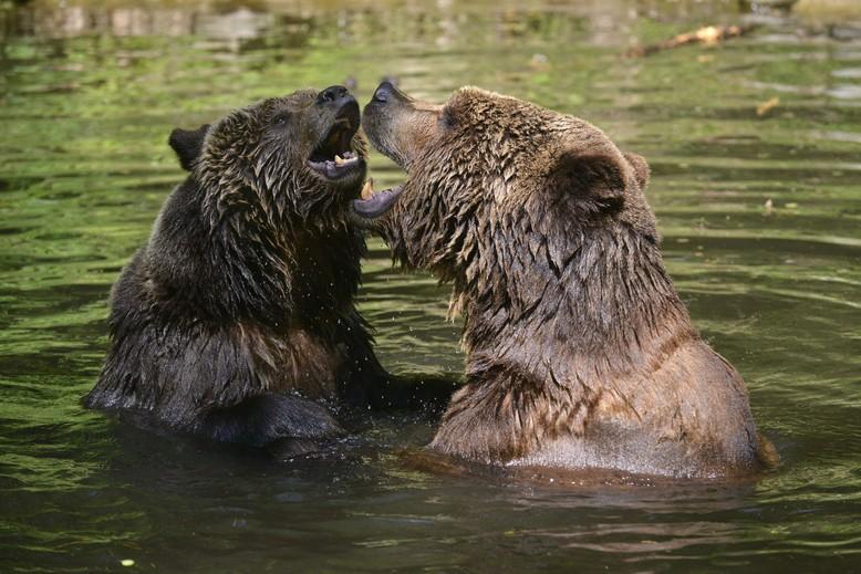 Lothar und Sindi waren die ersten Bären im BÄRENWALD Müritz