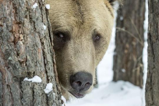 bear-tree-snow