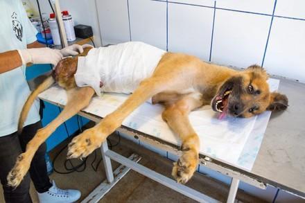 Operatiemateriaal hond