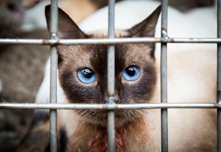Katze in Käfig in Vietnam