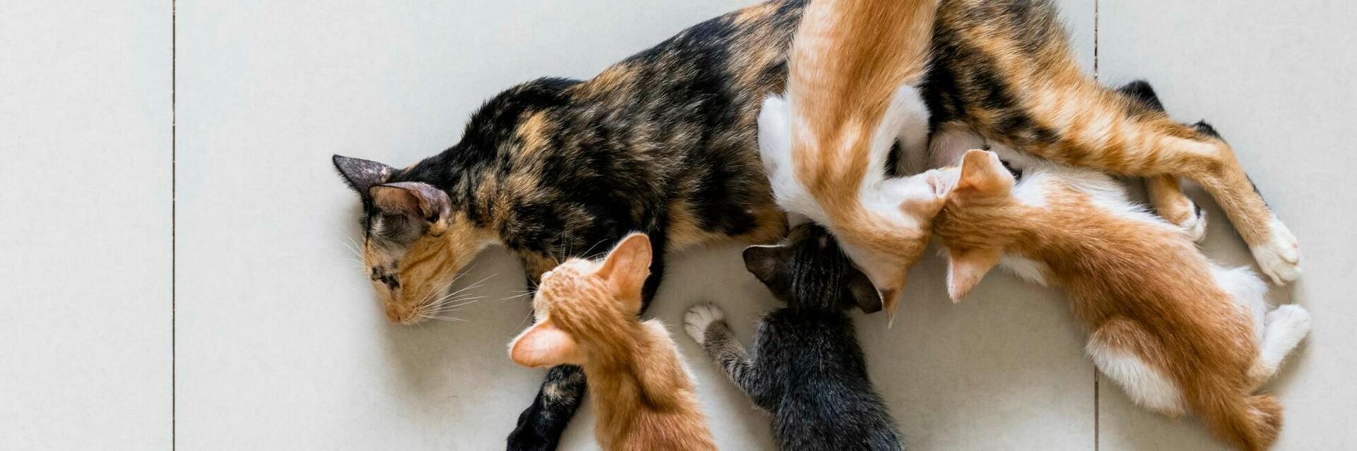 Katze mit Nachwuchs