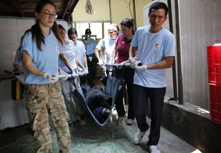 FOUR PAWS rescues five bears from agonising conditions in Vietnam
