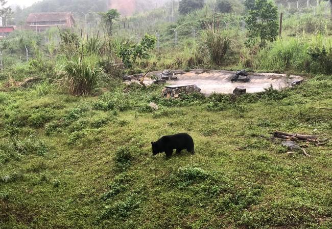 Bear Freddie in Ninh Binh