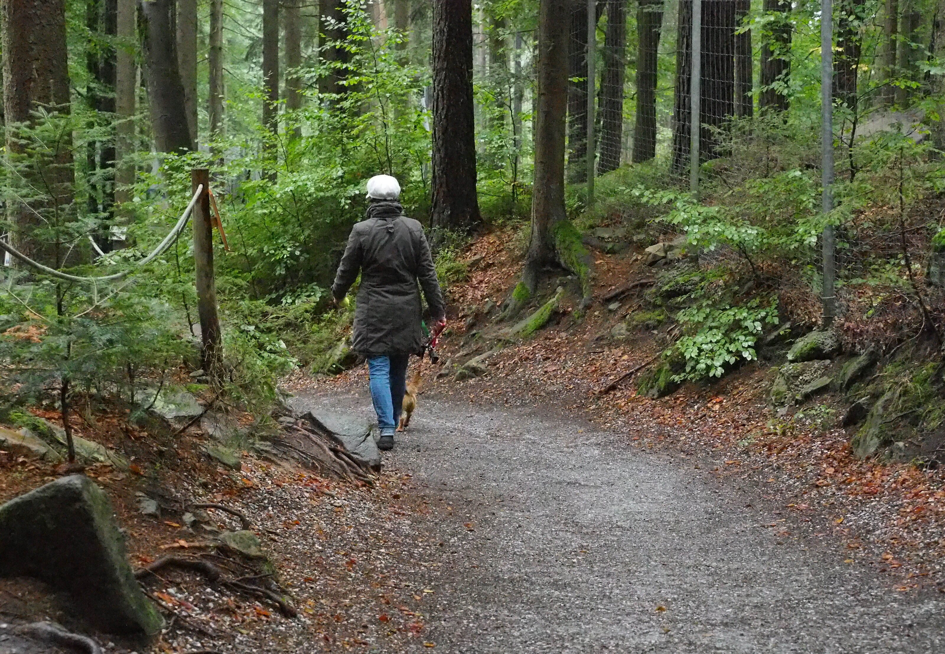 Am Besucherweg im BÄRENWALD Arbesbach