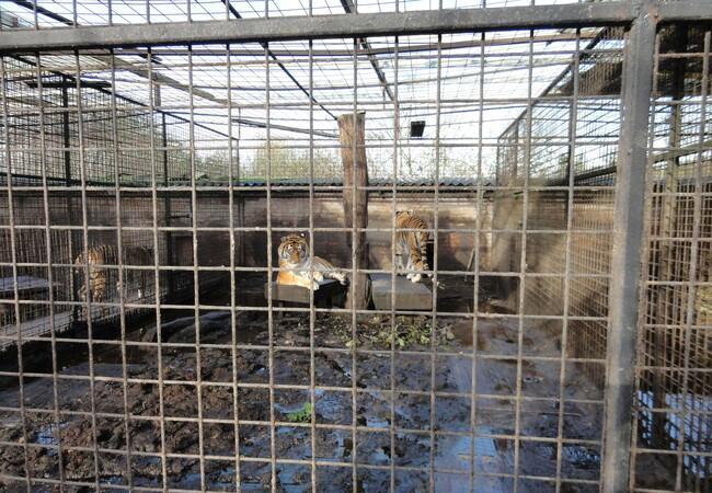 Small enclosures with no enrichment