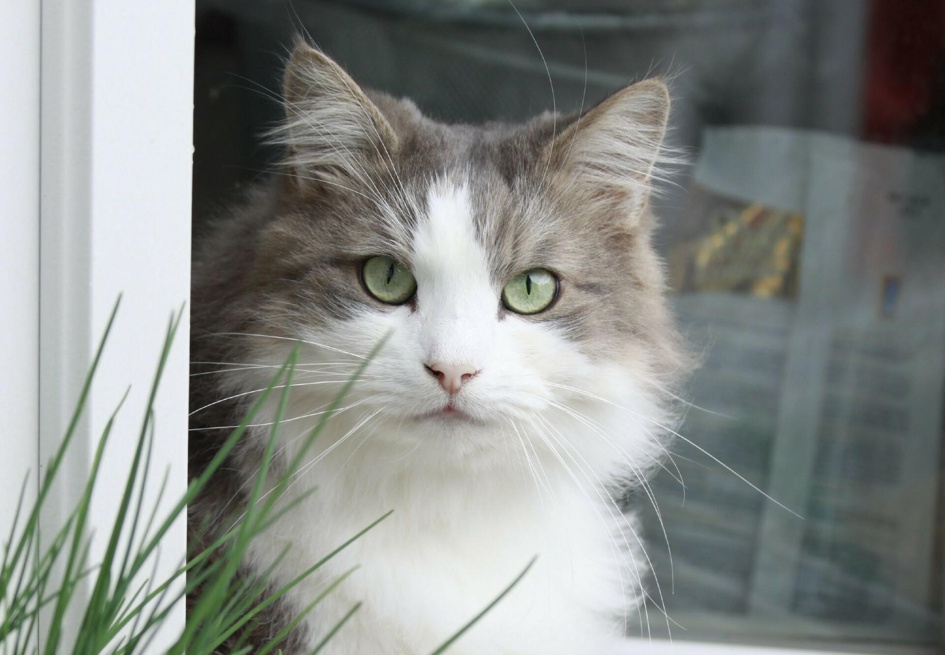 Katze in Balkontür
