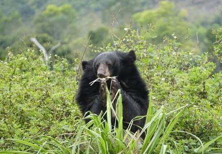 Rescue bear