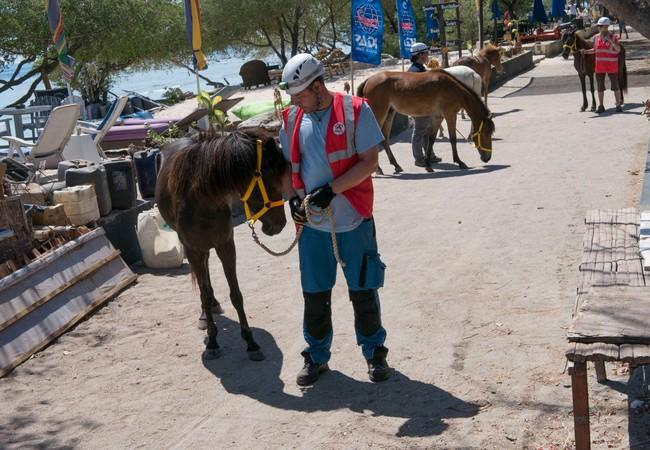 Care to the many horses of the Gili islands