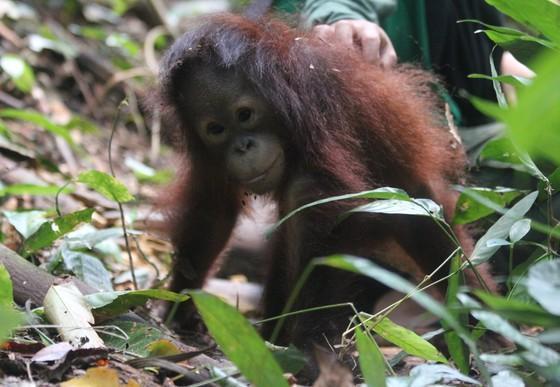 Little Damai on the forest floor