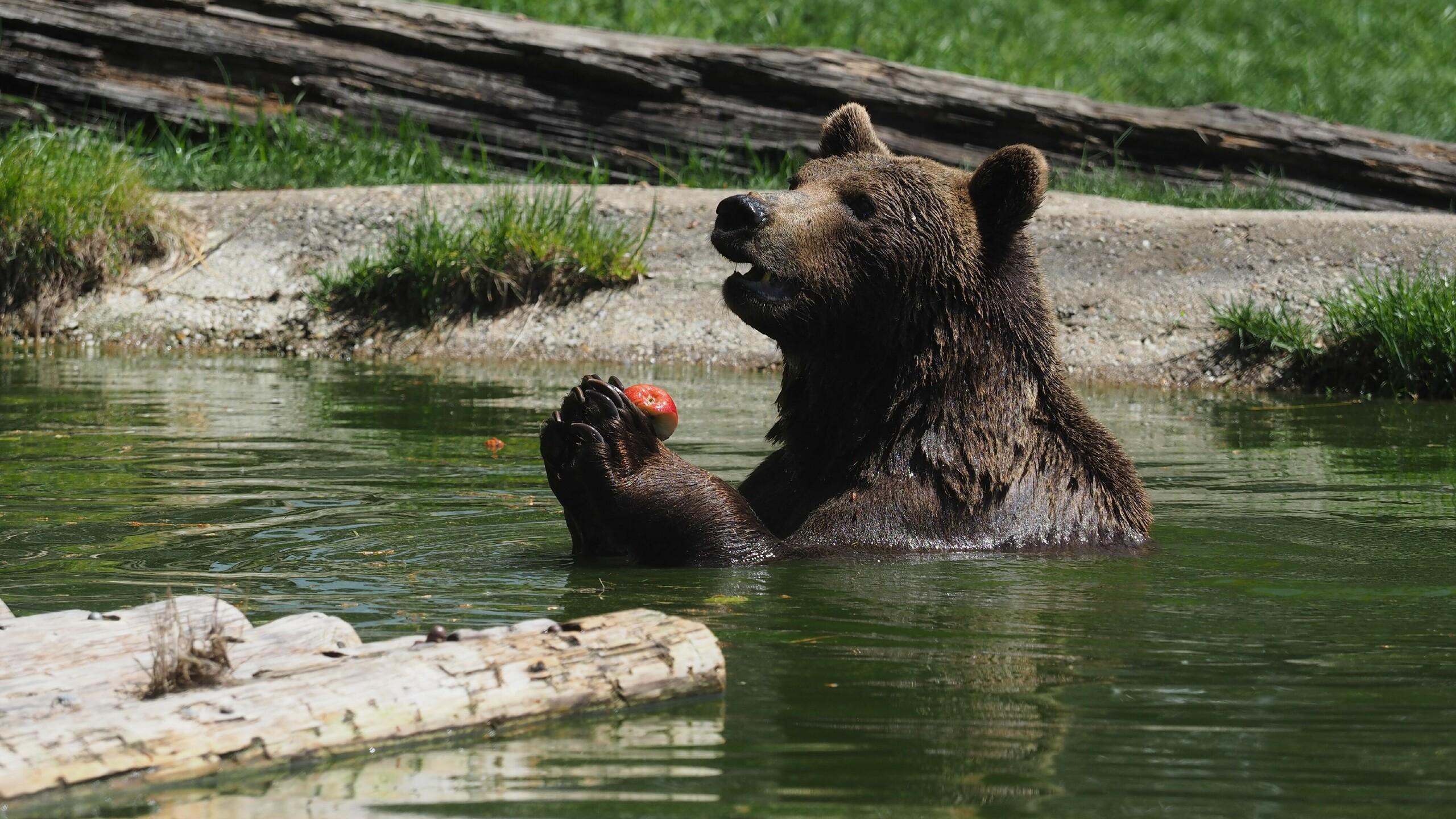Miri ließ es sich gerne im Teich schmecken