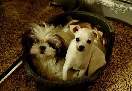 Hundewelpen in einem Schaufenster, wenig Licht und keine artegemäße Haltung