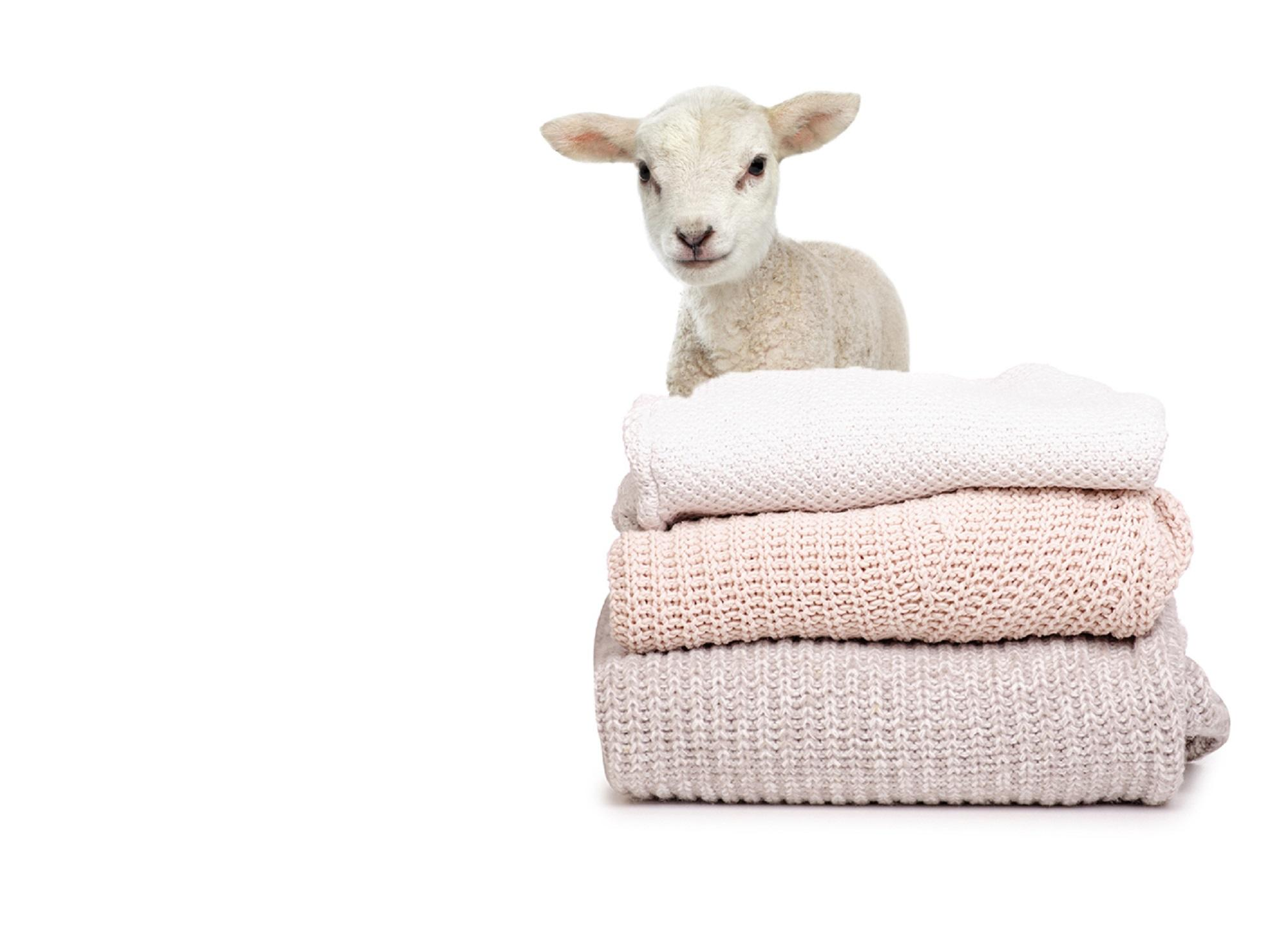 Animal Charity Lamb with Jumpers