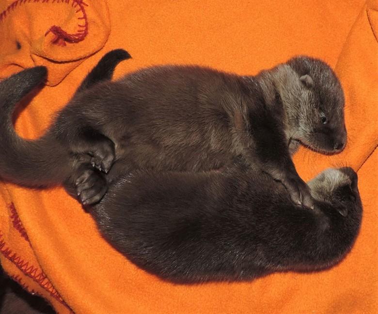 Geschwisterliche Otterumarmung