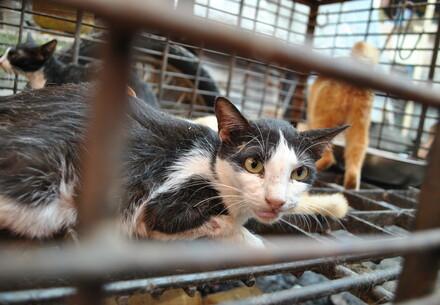 Kat opgesloten in kooi voor kattenvlees in Vietnam