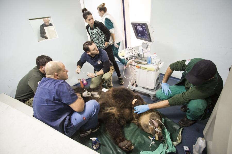 people-vet-clinic-bear-operation