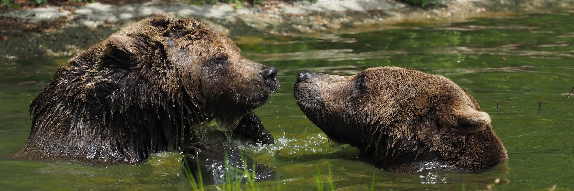 Bärin Emma und Bär Erich spielen im Teich