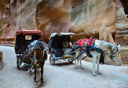 Kutschenpferde in Jordanien