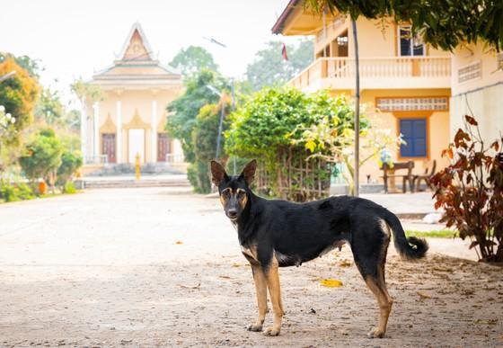Hund auf Silk Island