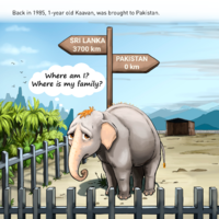A short illustrated story of Kaavan's life