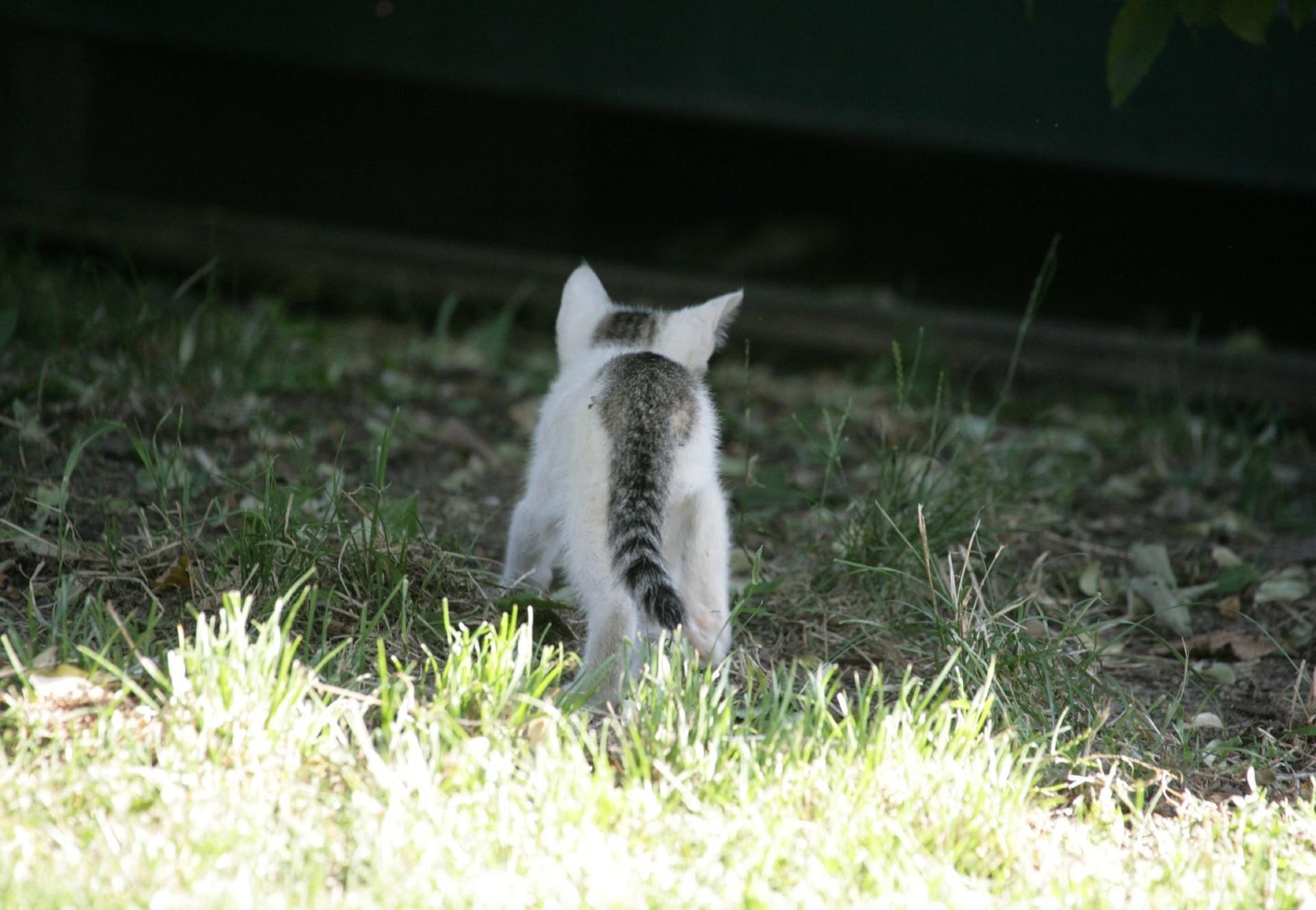 Verpiss dich pflanze h lt katzen auf abstand ratgeber heimtiere publikationen unsere - Katzenklo im garten was tun ...