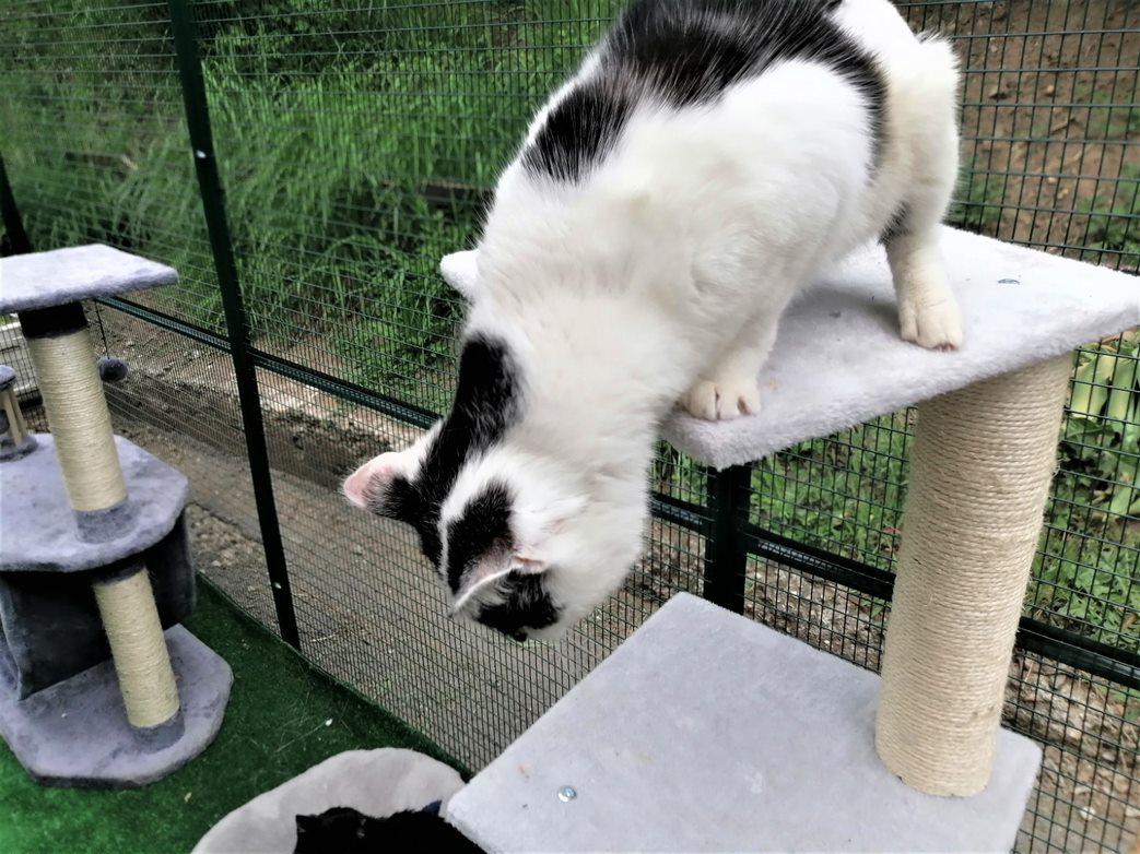 коте Кити