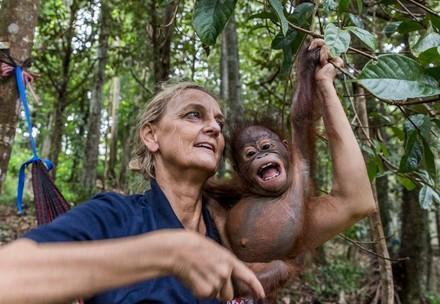 Orang-oetanproject op Borneo