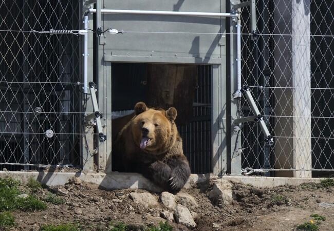 Bär Meimo erkundigt das Arosa Bärenland