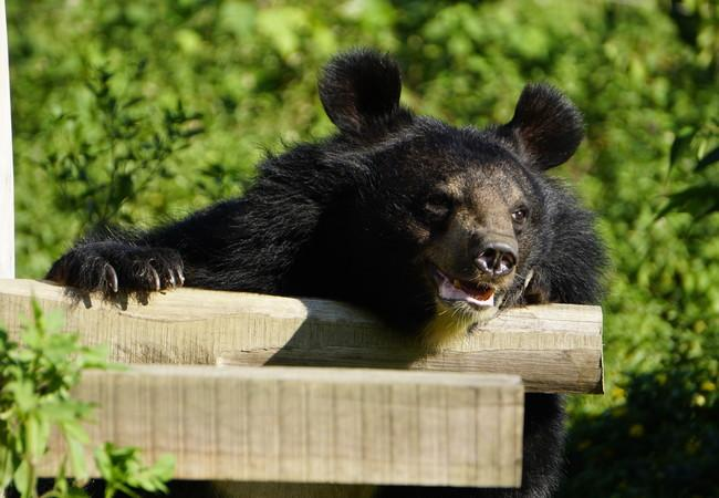 Bear Nhai enjoying the sunshine for the first time