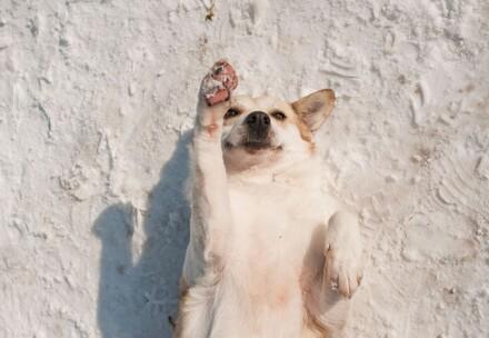 Chien allongé sur le dos dans la neige