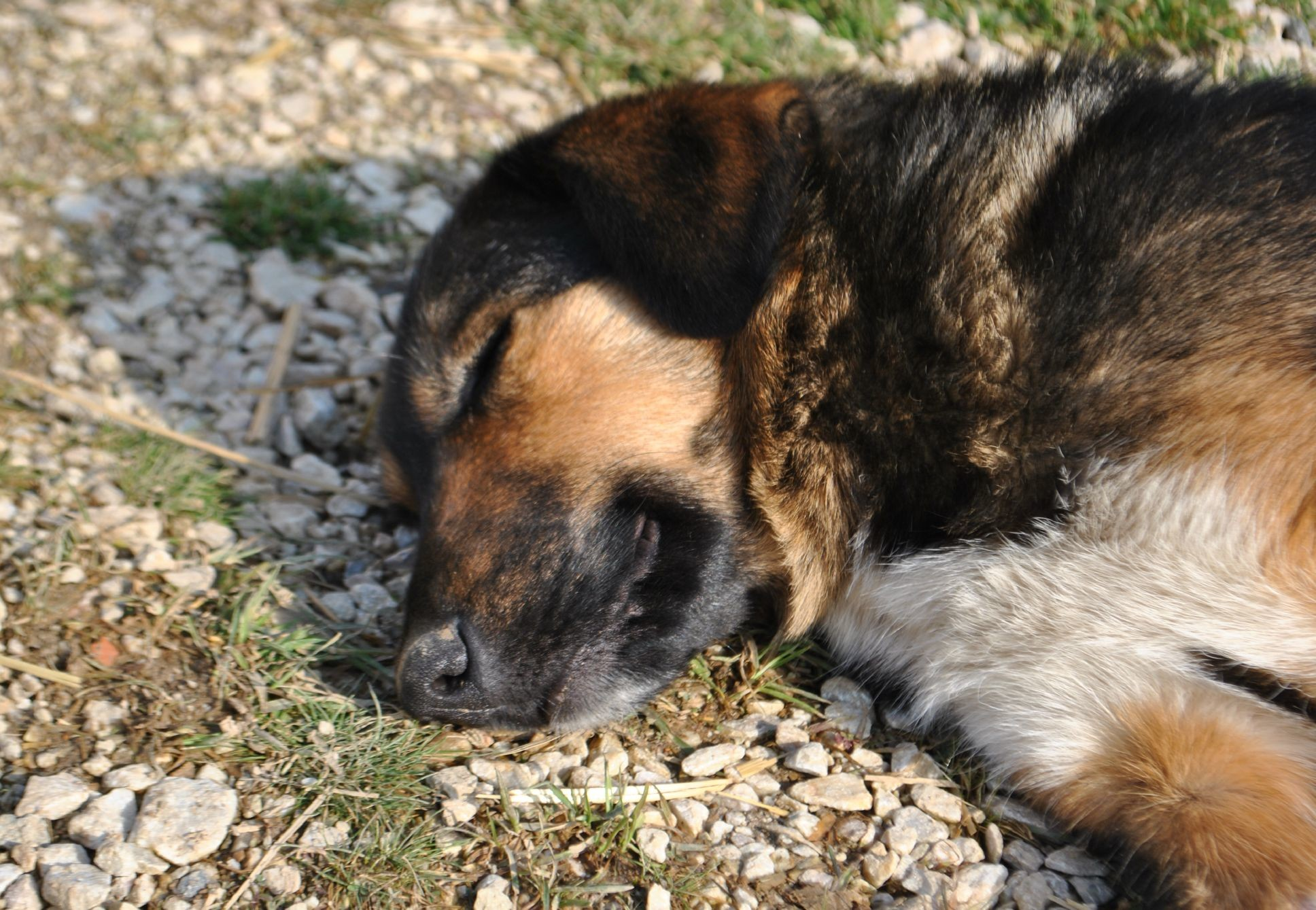 Travel-related illnesses in dogs