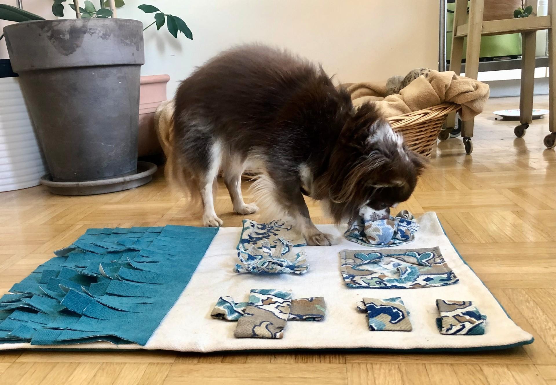 Anleitung für Schnüffelteppich für Hunde