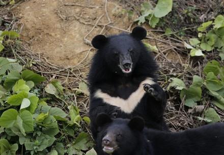 Bear Freddie