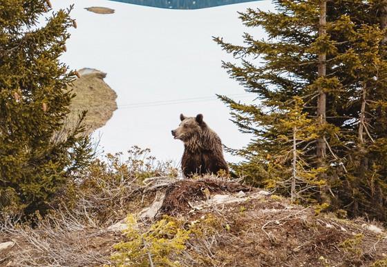 Jambolina im Arosa Bärenland