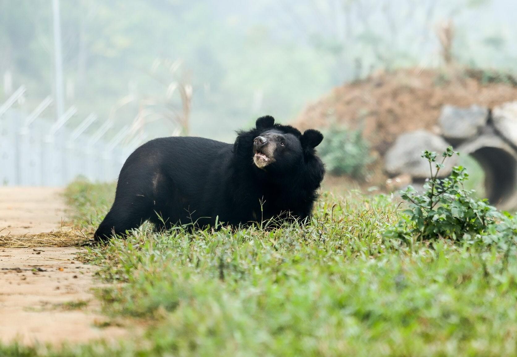Bear Nhi Nho at BEAR SANCTUARY Ninh Binh