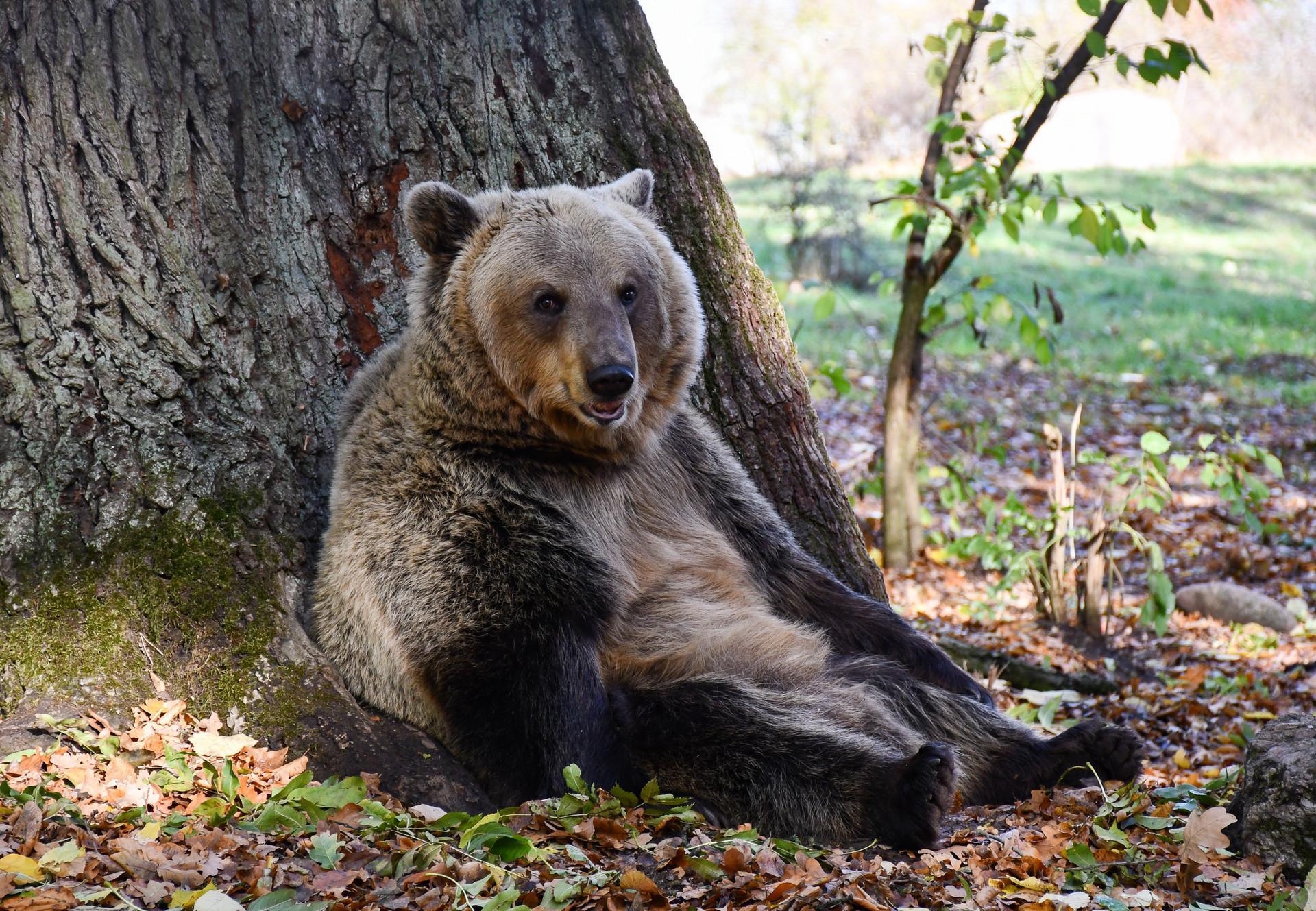 Mit der Reisegruppe die Bären besuchen