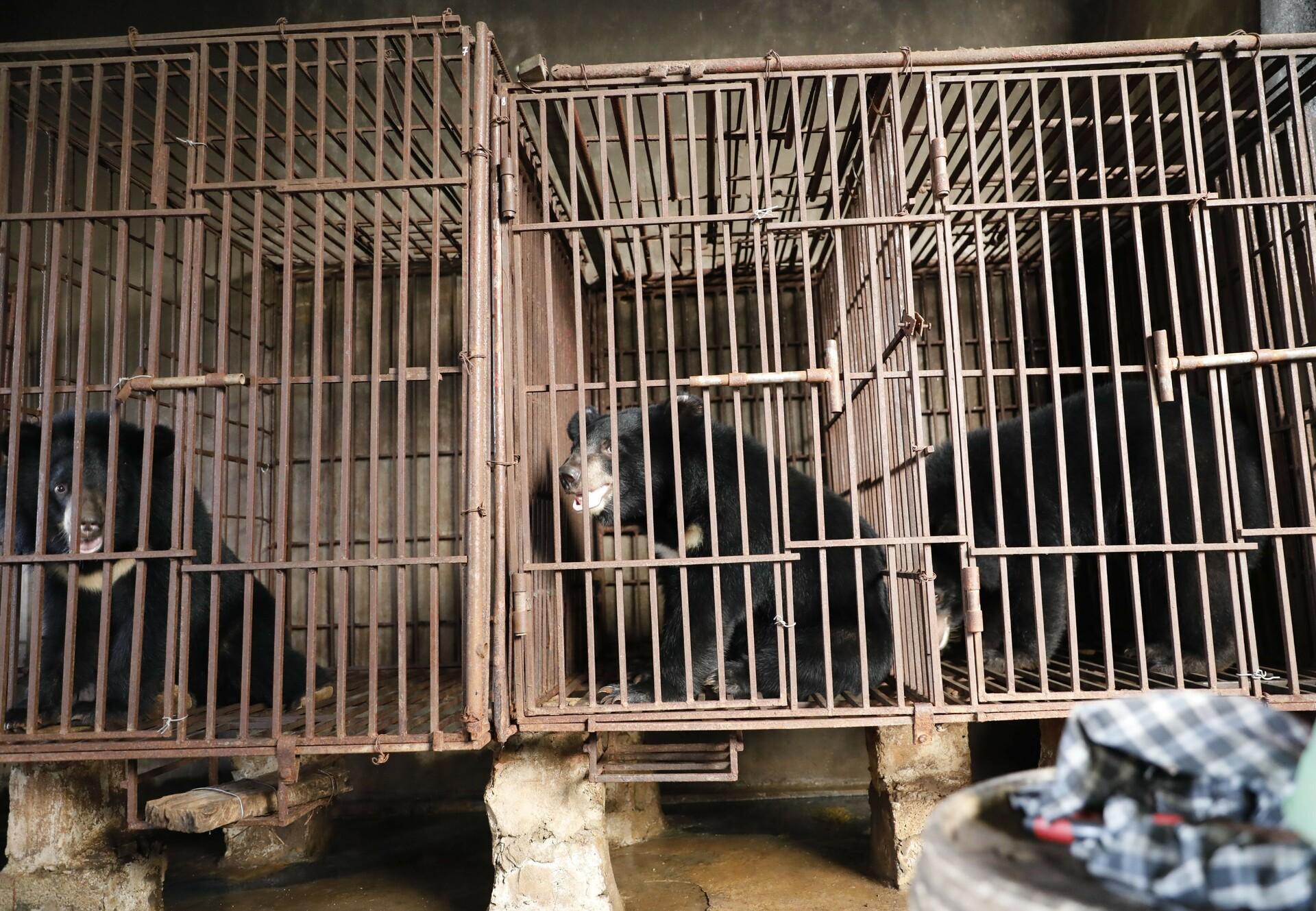Bears in Vietnam