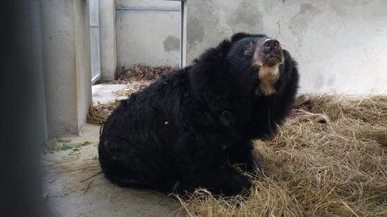 Rettung der Krangenbären Trang und Long