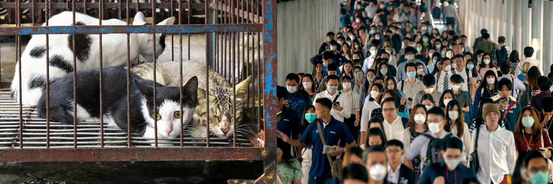 Mối đe dọa đối với Con người và Động vật