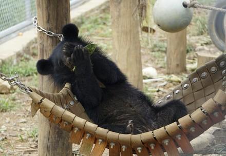 Bear Nara