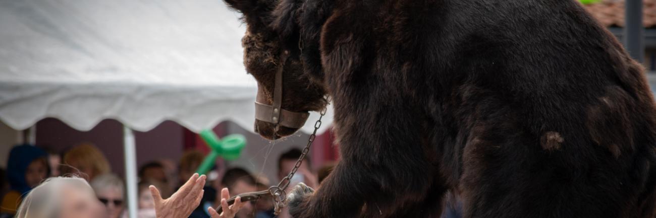 Bären in Frankreich