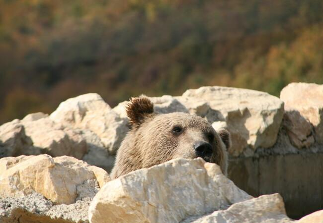 Bear Ron wondering where summer went at BEAR SANCUTUARY Prishtina