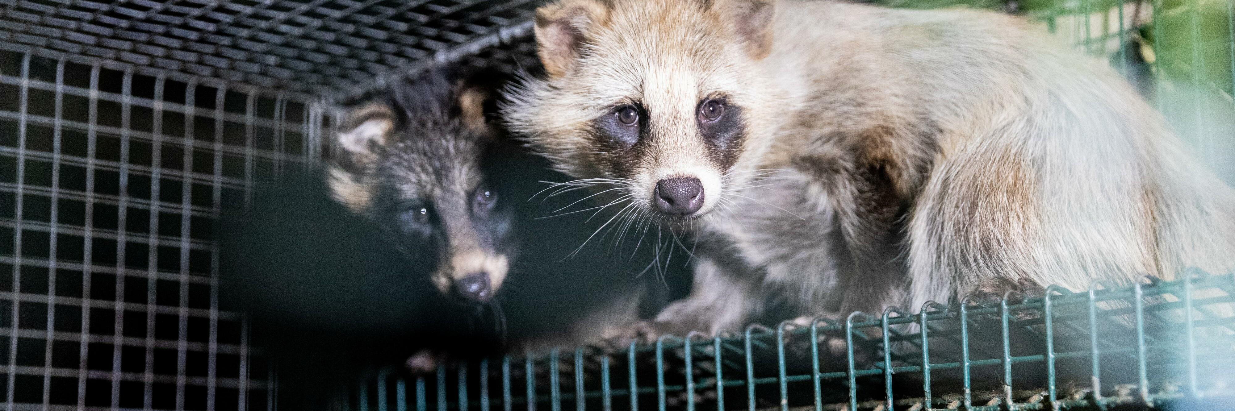 Fur Farm
