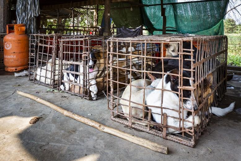 Markt für Hundefleisch in Kambodscha