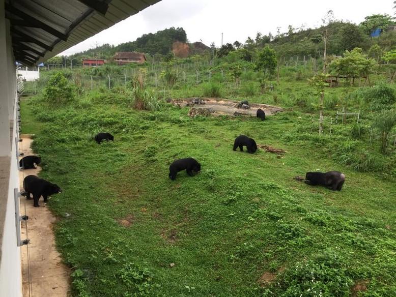 Die Bären werden sozialisiert