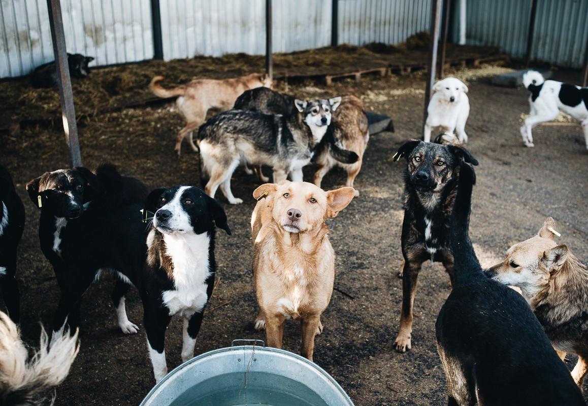 Helping stray animals