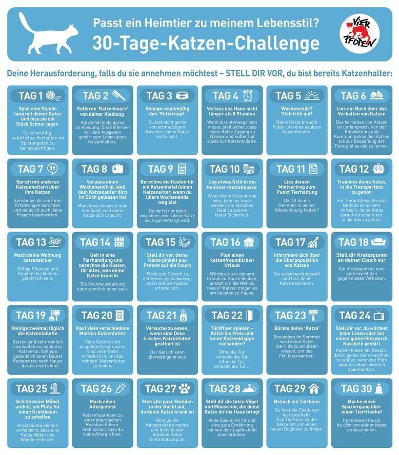 VIER PFOTEN 30-Tage-Challenge Katze