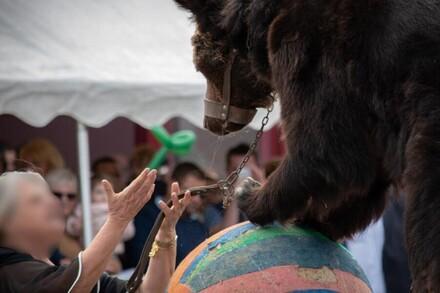 """#saddesbears en France - signer la pétition pour interdire la tradition des """"montreurs d'ours"""""""