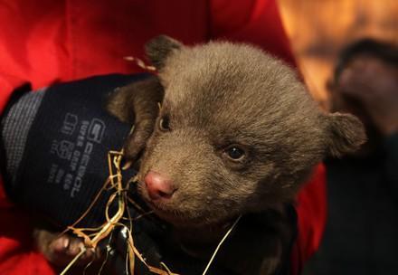 Das Bärenjunge ist nur wenige Monate alt. (c) VIER PFOTEN | Hazir Reka
